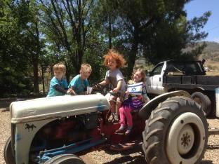 tractor yom haatzmaout camel dairy 2014